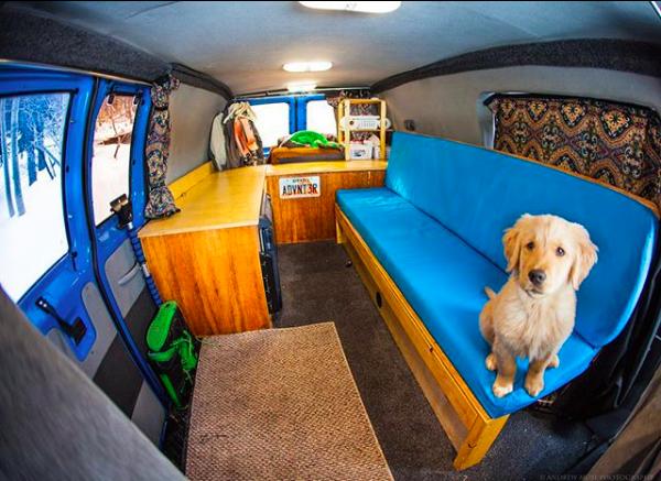 puppy in van
