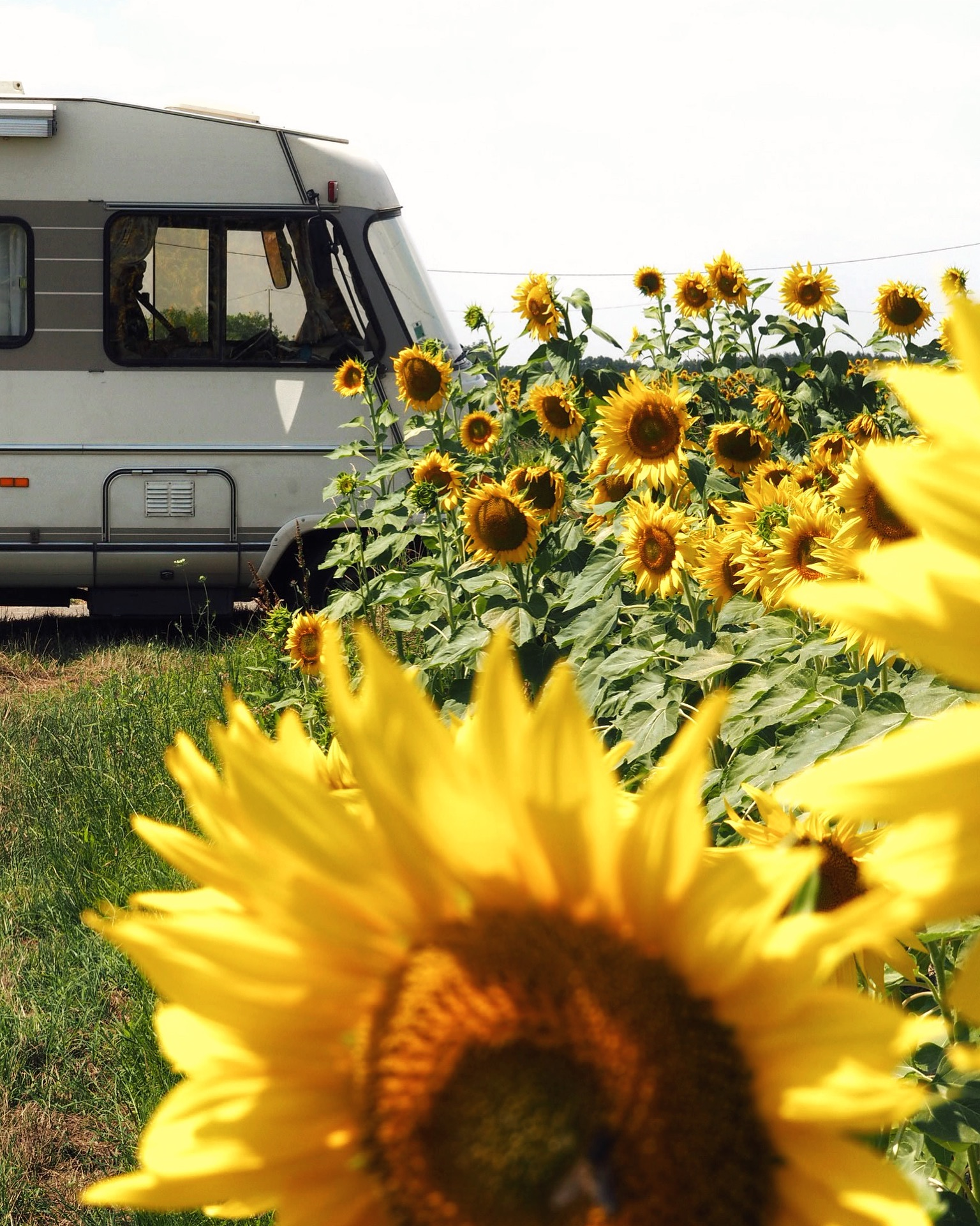 Auvergne flowers and RV