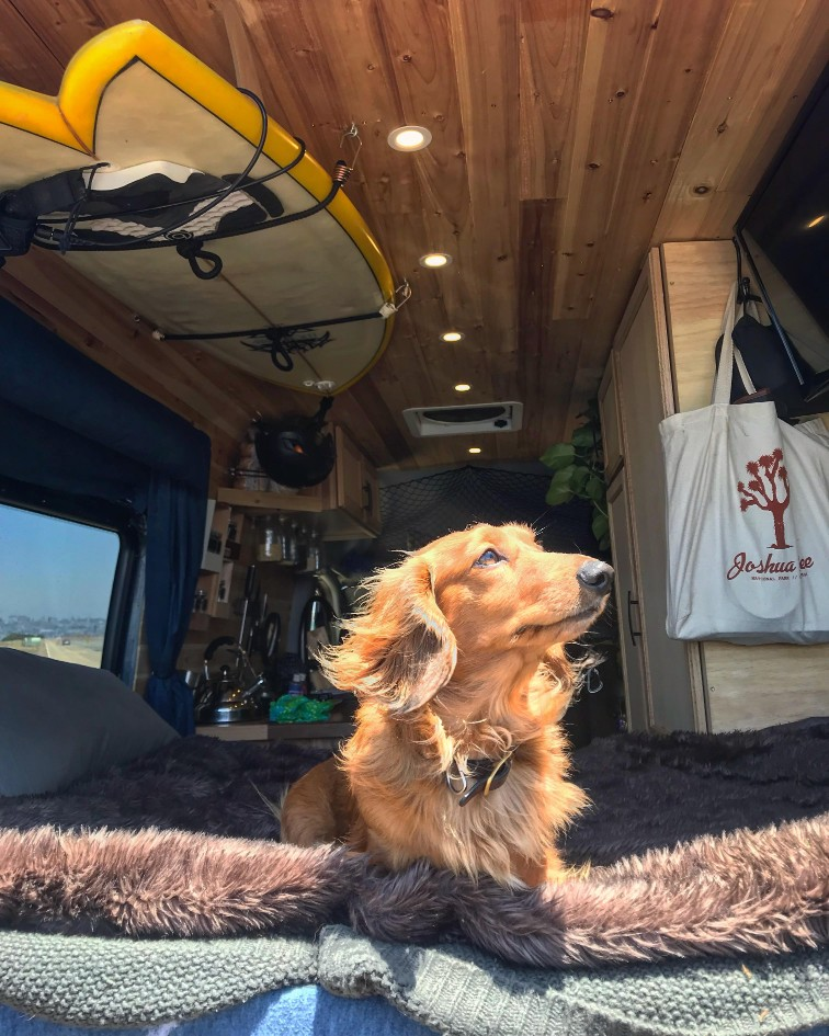 dog in camper van